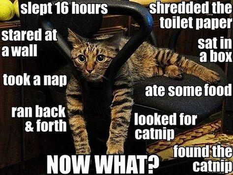 The hard life of a feline.