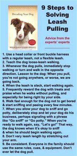 Pin On Dog Training Camp