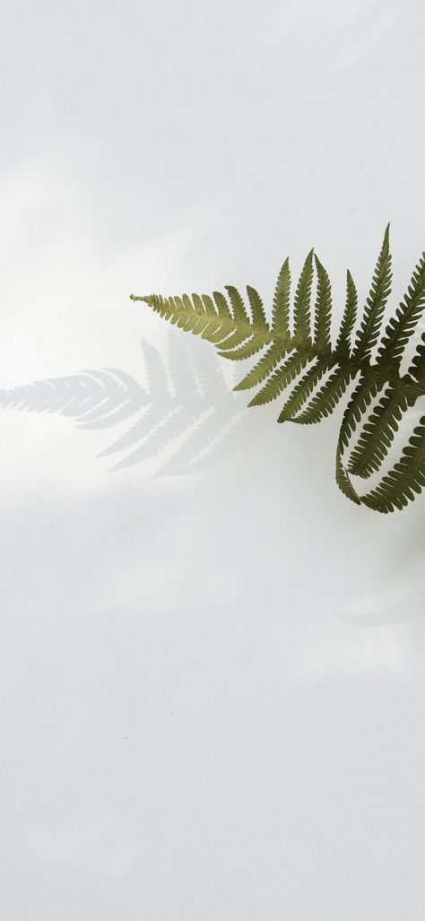 Fern Leaves White Background Android Minimal Wallpapers ⋆ Traxzee