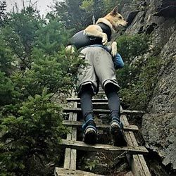 Pack A Paw Emergency Dog Carrying Harness Dog Emergency Dog