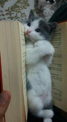 Pin On Cute Cuddly