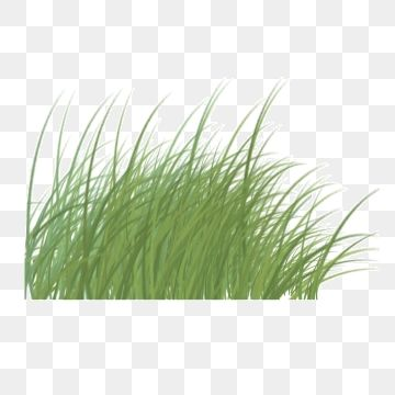 Wind Blowing Grass Illustration Wilderness Gardening Png Transparent Clipart Image And Psd File For Free Download In 2021 Grass Clipart Garden Clipart Clip Art