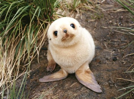45 Teeny Baby Animals You'll Want to Put in Your Pocket