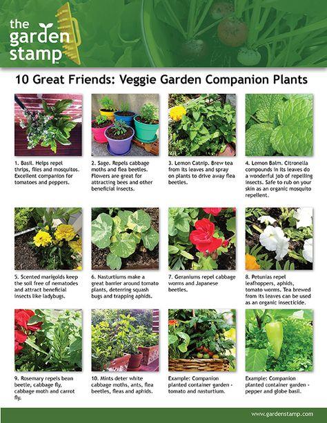 The 25 best panion gardening ideas on Pinterest
