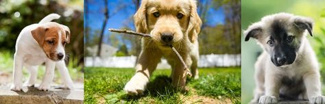 #puppies #animals #dog #photos #pictures #freewallpapers #freebies