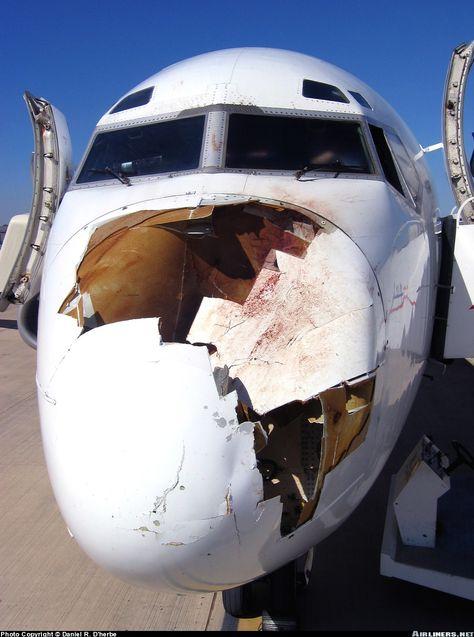 Photos Boeing 737 4 Aircraft Pictures Bird Strike Aviation Aircraft