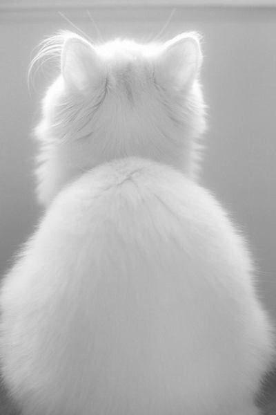 Inspirations Blanc D Hiver Moodboard Carnet Sauvage Blog Mode Lille Moodboard De Photos D Inspiration Mode Pay Esthetique Blanc Animales Esthetique Chat