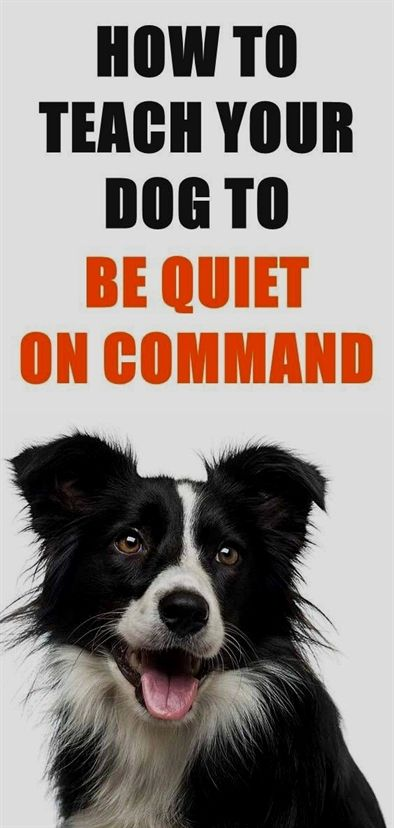 Dog Training Methods Dog Training Resource Guarding Dog