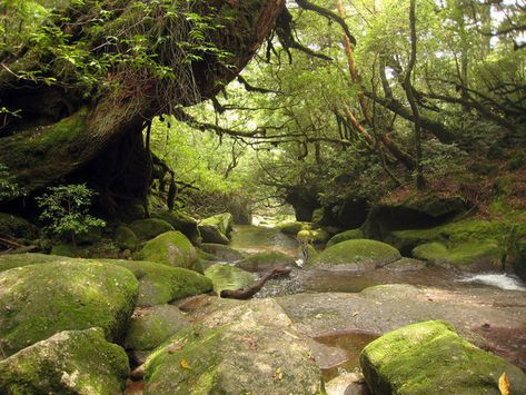 """The Magical Forest That Inspired """"Princess Mononoke"""""""