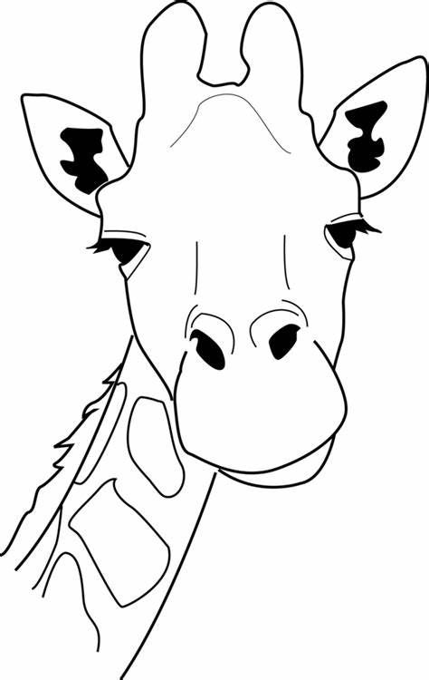 Image Result For Giraffe Head Coloring Page Giraffe Art Animal