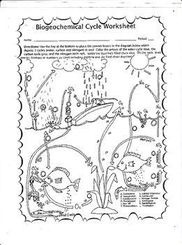 Biogeochemical Cycle Worksheet Matter Science Drawing