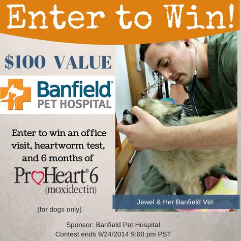 photograph regarding Banfield Coupons Printable named Preceding this 7 days I shared my working experience with Banfield Doggy