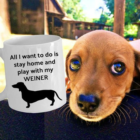 Weiner Mug Dachshund Mug Little Weiner Want To Stay Home Play With My Weiner Dog Mug Love My Dachshu