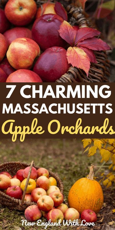 7 Great Places To Go Apple Picking In Massachusetts In 2020 Apple Picking New England Fall Apple Picking Boston