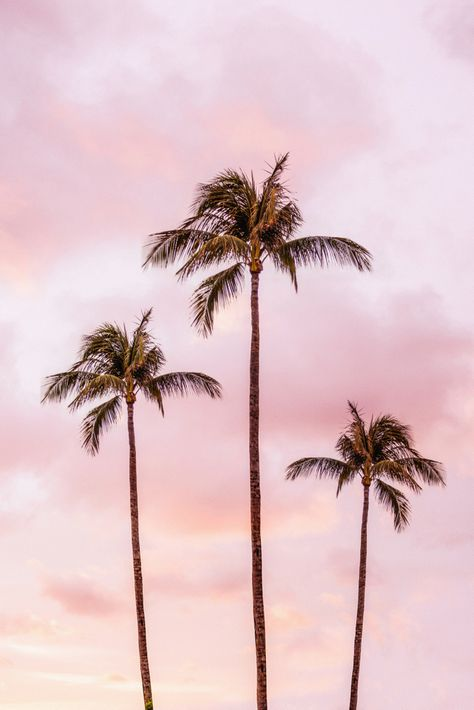 Palm Tree Photography Landscape Sunset Unicorn Clouds Blush Millennial Pink Acrylic Box by Wildhood - 4 X 4 X 3 Bedroom Wall Collage, Photo Wall Collage, Picture Wall, Wall Art, Aesthetic Backgrounds, Aesthetic Iphone Wallpaper, Aesthetic Wallpapers, Pink Framed Art, Pink Art