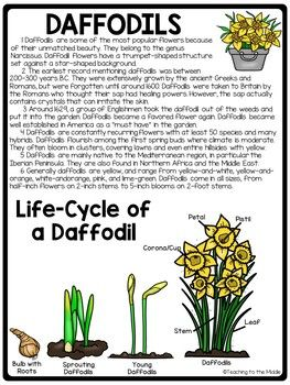 Daffodils Informational Reading Comprehension Worksheet Spring Flowers Comprehension Worksheets Informational Reading Reading Comprehension Worksheets