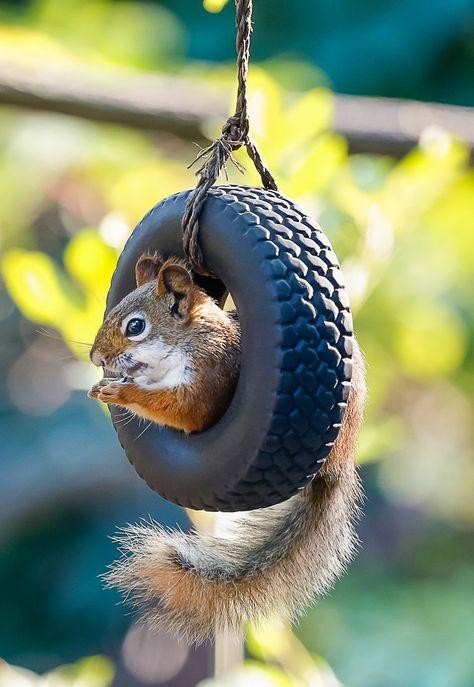 Squirrel tire swing, so cute!