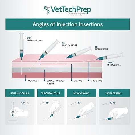 Vet Tech, do you know your Angles of Injection Insertions? Check out our latest infographic! Veterinarian School, Veterinarian Technician, Veterinarian Quotes, Veterinarian Assistant, Vet Assistant School, Veterinarian Scrubs, Veterinary Studies, Veterinary Medicine, Veterinary Care