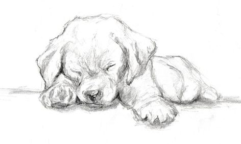 Quick Graphite Sketch of a Labrador Puppy