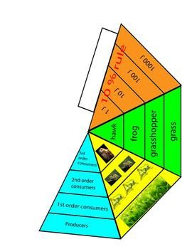 Ecological Pyramid Model Lesson Biomass Energy And Food Chains Energy Pyramid Pyramid Model Ecological Pyramid