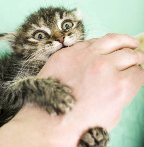 How To Stop Your Cat From Biting You During Playtime Cat Biting Cat Training Cat Attack