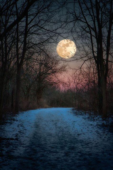 "Art my Fire on Twitter: """" Wolf Moon. . . Winter Path ""                                                📷: © Jim Crotty #Photography… """