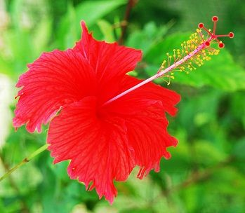 10 Best Home Remedies To Remove Dandruff Styles At Life Hibiscus Hibiscus Leaves Dandruff