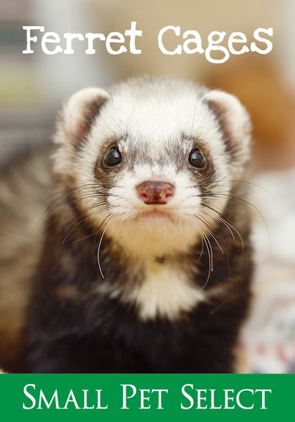 Ferret Cages Advice And Guidance Give Your Ferret The Best Environment Ferret Cage Ferret Small Pets