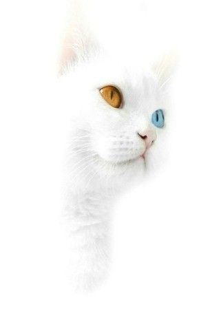 Pin By Sarah Demayo On Animals White Cats Animals Wallpaper Iphone Cute