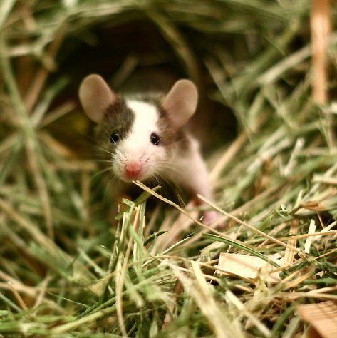 Looks a little like Mattie's mouse!