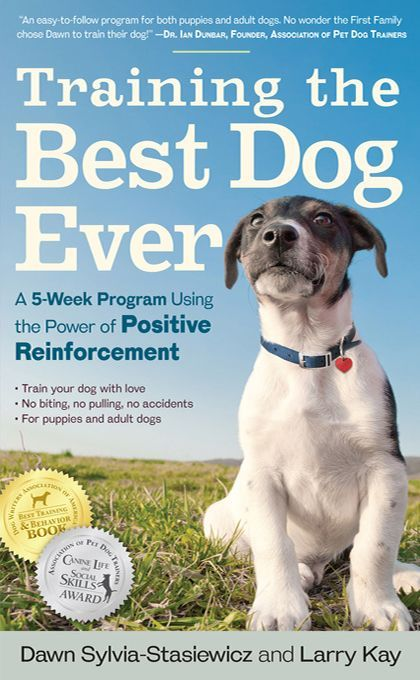 How To Become A Professional Dog Trainer A Dog Training Career