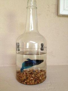 Best 25 Kinkajou Bottle Cutter Ideas On Pinterest Wine Bottle