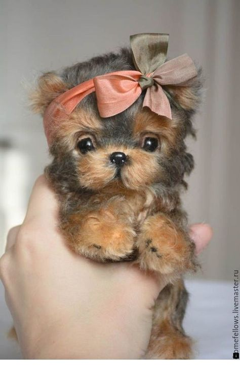 Top 10 Cutest Dog Breeds — Small Cutest Dogs We Can't Get Enough Of We want to bet that these adorable little pooches will certainly melt any type of pet lover's heart. Top 10 Small Dog Breeds Choosing The Right Dog for You Tiny Puppies, Cute Little Puppies, Cute Dogs And Puppies, Cutest Dogs, Bulldog Puppies, Little Dogs, Baby Animals Super Cute, Cute Little Animals, Cute Funny Animals