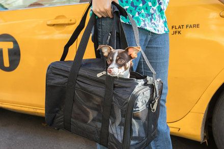 6 Must Haves When Flying With A Cat Or Dog In 2020 Dog Travel