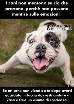 Frasi Sui Cani Pitbull.Risultati Immagini Per Aforismi Sui Cani Cani Animali Andare A Casa