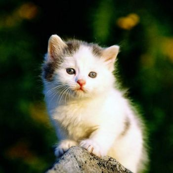 Life Is Beautiful Friends Facebook Page Cat Wallpaper Cat Watch