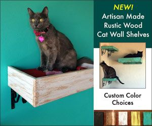 Why Your Cat Wants Tunnel Vision For Evening Bug Hunts Cats Outdoor Cat Tunnel Cat Wall