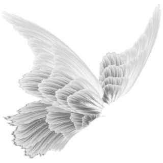 Fairy Wings Magic Stickers Transparent Aesthetic White Fairy Wings Png Wings Png Fairy Wings Blue Fairy Wings