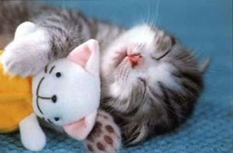 """MONDAY MUSINGS:  A little """"catnap"""" cuteness on today's National"""