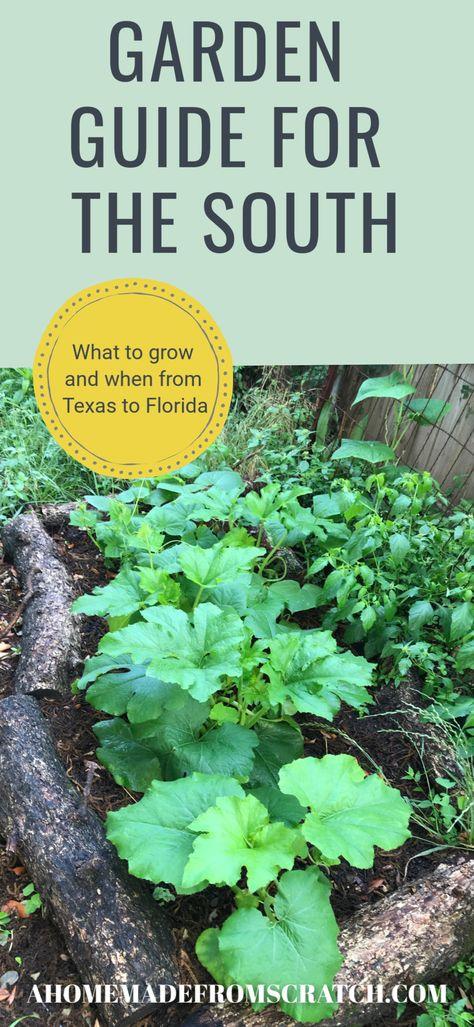 Fall Garden Vegetables, Winter Garden Florida, Autumn Garden, Garden, Winter Gardening Plants, Garden Guide, Winter Vegetables Gardening, Winter Plants, Texas Gardening