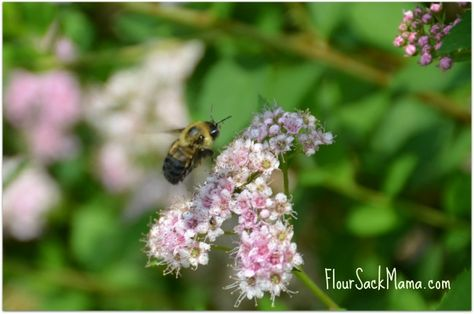 Saturdays in the Garden: Tiny Insect Inhabitants & Organic Care for the Ecosystem - via @Flour Sack Mama