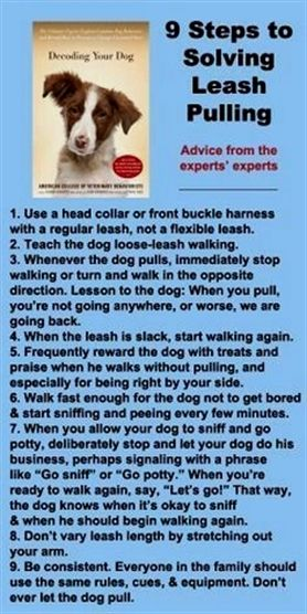 A Few Tricks To Help You Train Your Dog Dogs Dog Training