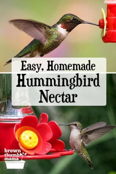 Make This Easy Hummingbird Nectar Recipe And Attract Tons Of