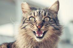 Deine Katze Miaut Standig Mit Dieser Checkliste Findest Du Die