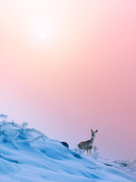 16 Images Inspired by Pantone's 2016 Colors of the Year: Rose Quartz & Serenity