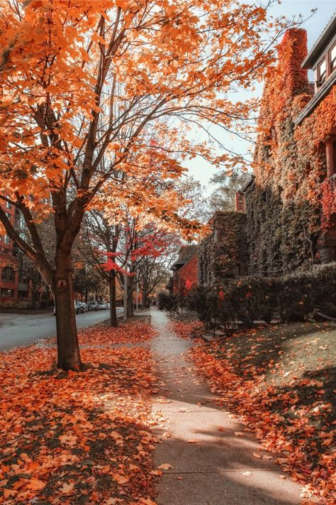Seasons In Bloom — soul-of-an-angel: Toronto (Canada) Autumn Scenery, Autumn Nature, Autumn Aesthetic, Autumn Cozy, Fall Winter, Fall Wallpaper, October Wallpaper, Autumn Photography, Toronto Photography