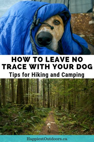 Do you hike with a dog? Learn how to Leave No Trace With Dogs. These tips for hiking with dogs and camping with dogs will help keep protect the environment, keep your dog safe, and make sure you have a good time on your hike. Includes tips for what to do with dog poo when hiking, when to keep your dog on a leash on the trail, and how to keep your dog safe in camp. If you hike and camp with dogs, you need these tips from a woman who hiked the Pacific Crest Trail with her dog. #hikingwithdogs