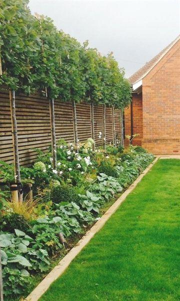 Pin On Organic Gardening