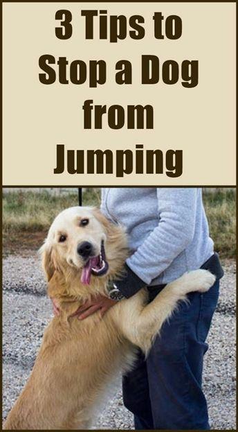 Dog Training Arm Types Of Dog Training Methods Dog Training 2