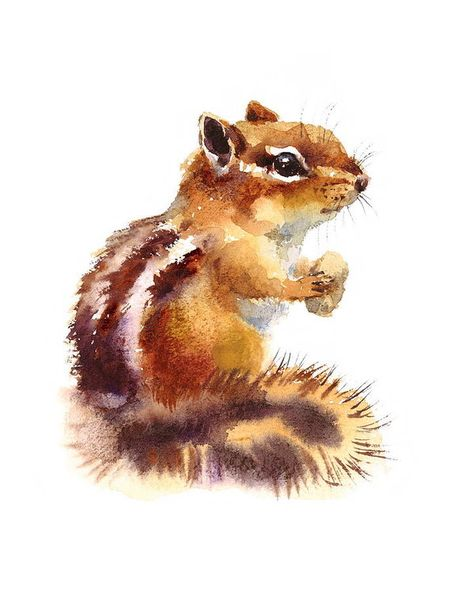 Watercolor Chipmunk Eating Nuts Wild Animal Rodent Hand Drawn Illustration isolated on white background - stock photo Animal Paintings, Animal Drawings, Art Drawings, Watercolor Illustration, Watercolor Paintings, Watercolor Animals, Wildlife Art, Chipmunks, Painting & Drawing
